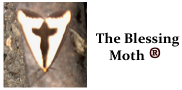 The Blessing Moth